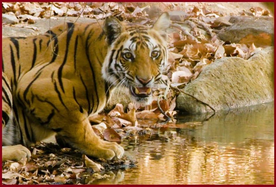 72 animales peligrosos Asia documental Netflix