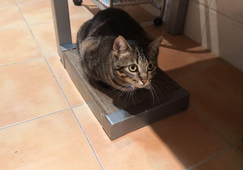 rascador para gatos - Estrenando rascador.