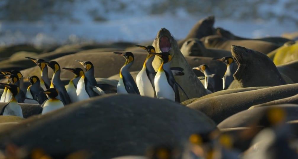 Nuestro planeta pingüinos